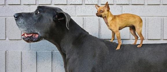 Animalcity.gr - ποσα χρονια ζουν τα σκυλια 2