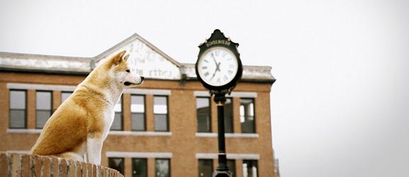 Οι 10 καλύτερες ταινίες με σκυλιά
