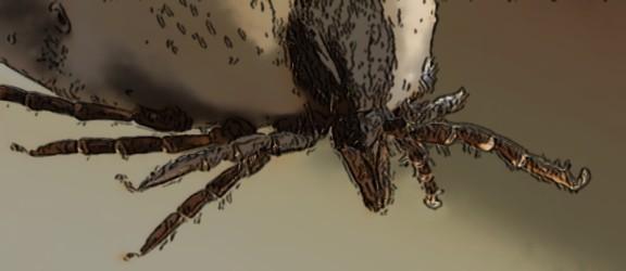 Animalcity.gr - 10 γεγονότα για τα τσιμπούρια