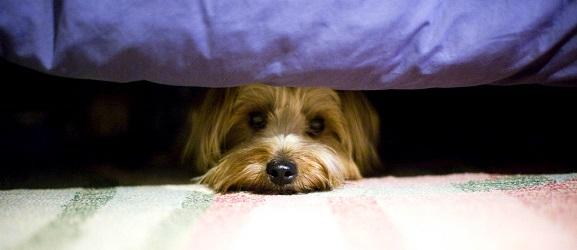 Γιατί φοβούνται οι σκύλοι τους κεραυνούς;