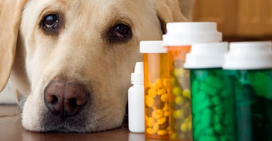 Resultado de imagem para farmacia veterinaria