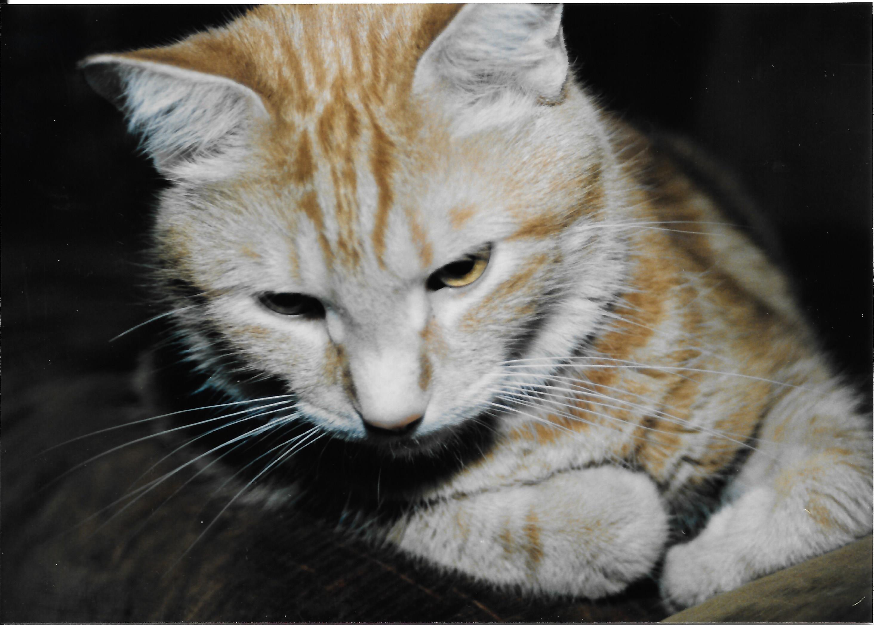 Esophagostomy Tube Feeding In Cats