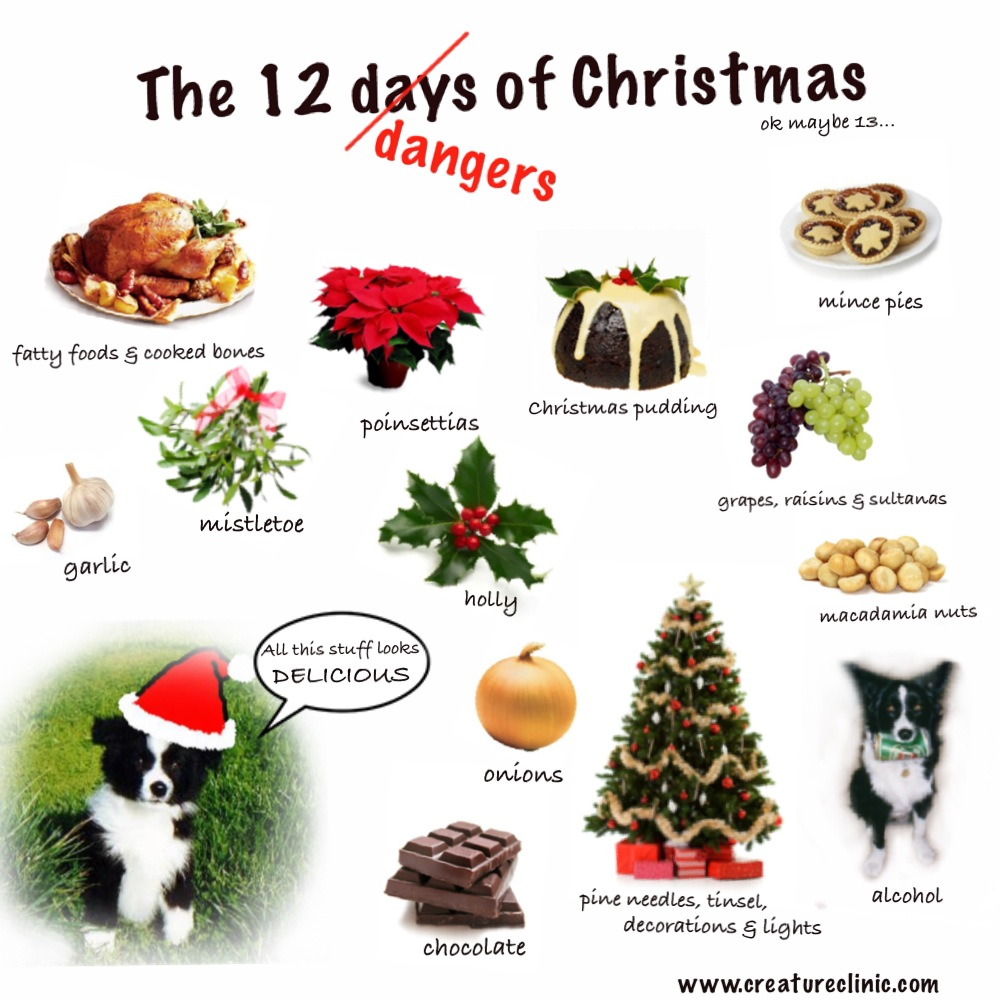 Animal Clinic at Thorndale, p.c.Pet Holiday Hazards – We have some ...