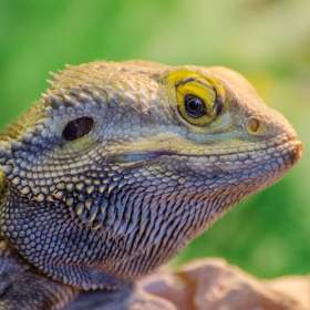 reptiles learn through imitation