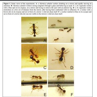 Ant Mirror Test, animals that have passed the mirror test
