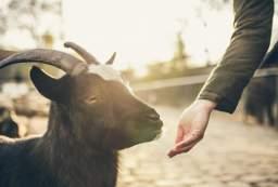 The Intelligence of Farm Animals