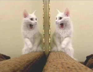 Cat shocked by reflection, list of animals that have passed the mirror test