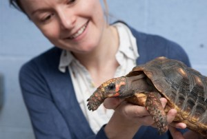 training-turtles-617x416