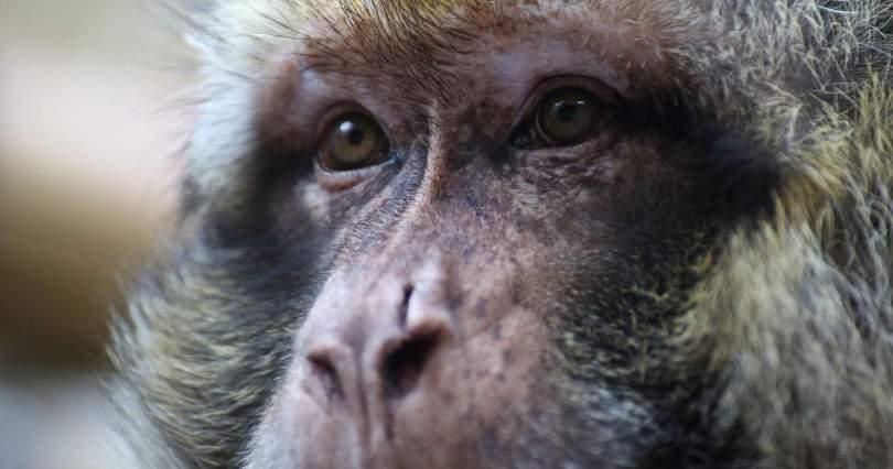 Primate Eyes