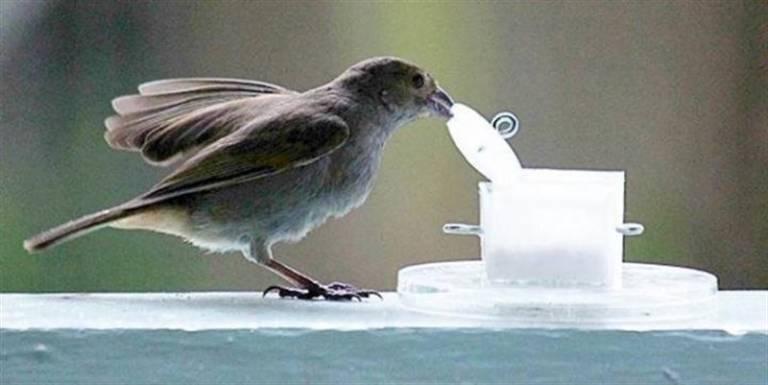 Louis-Lefebvre bird | Animal Cognition