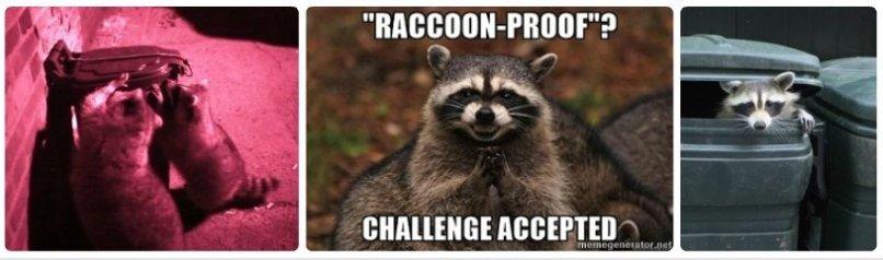 Raccoon Trash Cans, Environment Influences Animal Intelligence