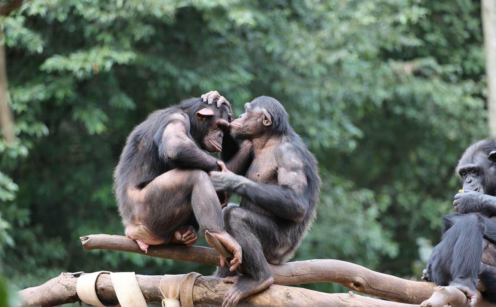 If i were a monkey essay