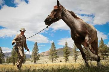 Horse communication with humans