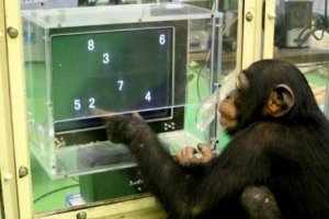 animals smarter than humans