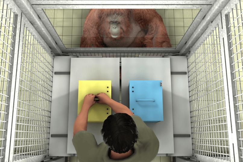 Great apes understand false beliefs