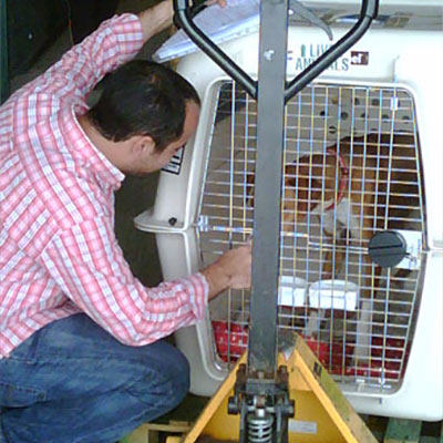 pet transport services | Animalcouriers