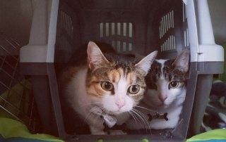 Adorable Salem and Luna