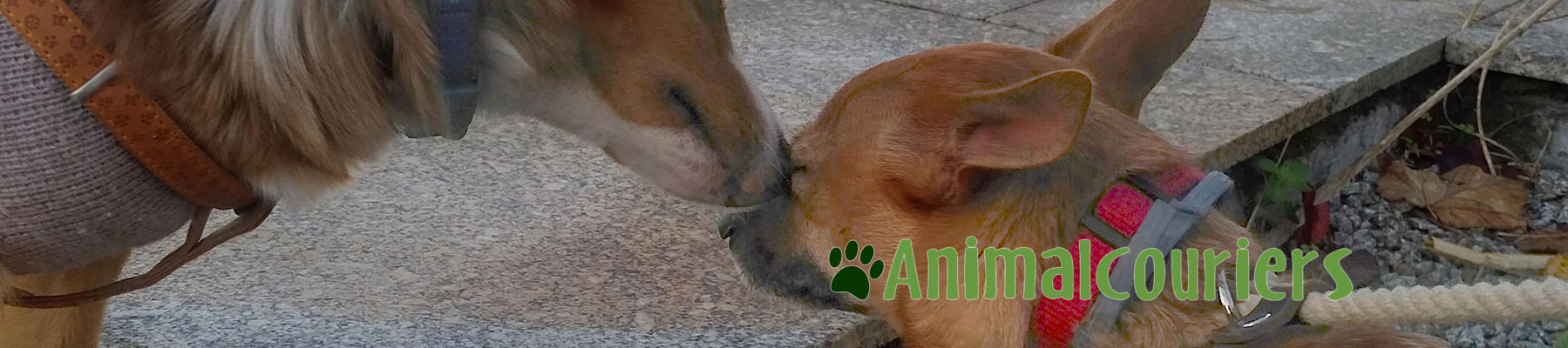 two animal passengers touching noses