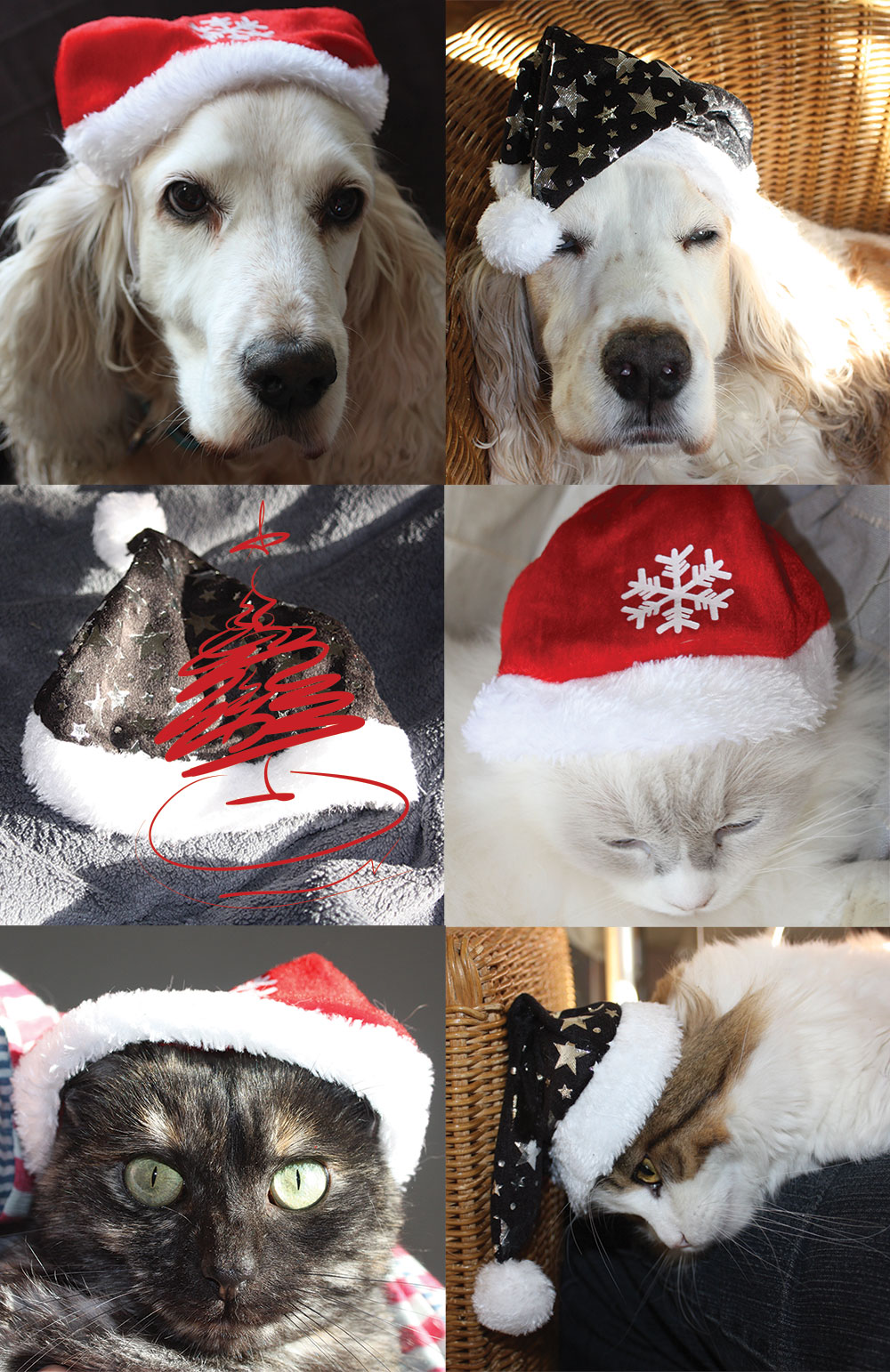 Season's greetings from our web team's menagerie: Milly, George, (camera-shy) Iggy, Tinker, Bean and Pippin
