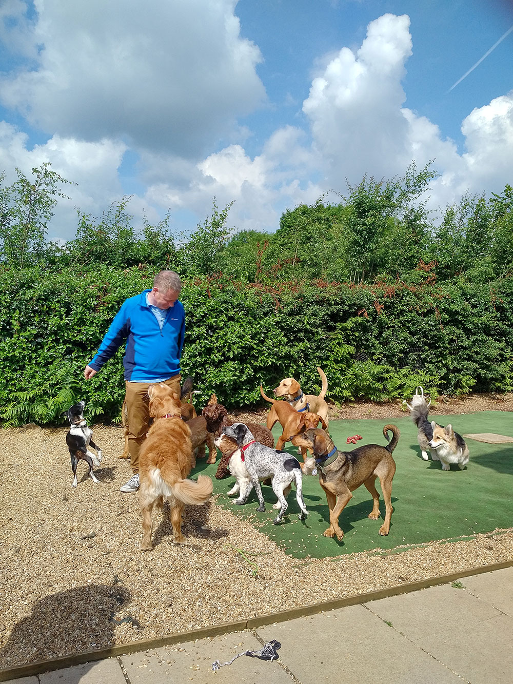 Courier Richard caught up with the dogs as they were having a good runaround