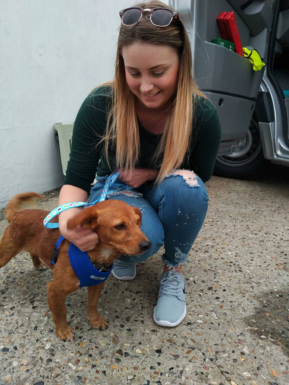 Here's clever Nelson, who attached himself to Joanne when she went on holiday to Lesvos. He's on his way to a new life with her in Ipswich