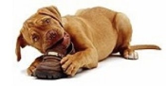 Why you should choose our Indianapolis Doggy Daycare Services