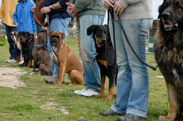 Indianapolis-dog-training-class-sept