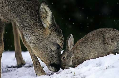 Image result for rabbits and deer