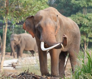 Advocate for endangered elephants and other animals
