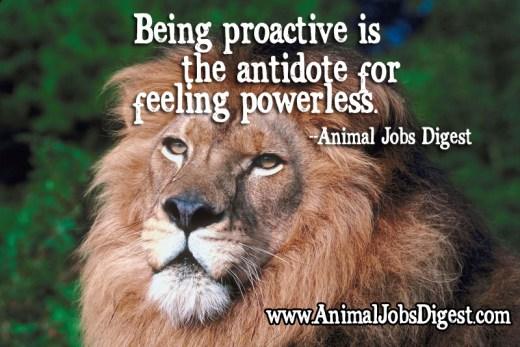 African Lion with quote