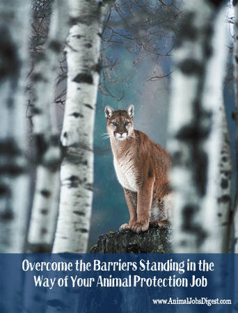 Panther in Forest - Overcome Barriers