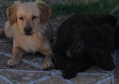 Pippo e Pippa