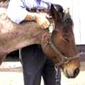horseheadsmall
