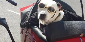 cane con occhiali