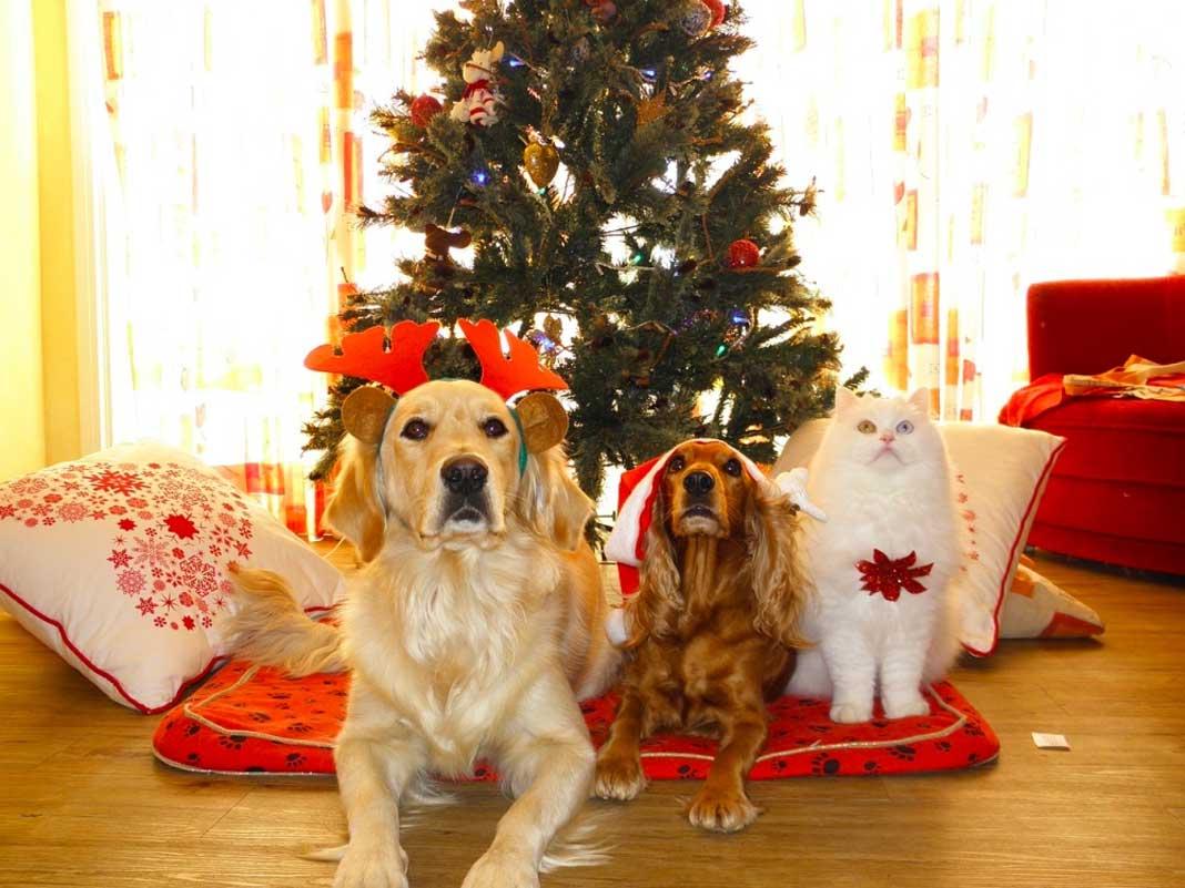 Menu di Natale per cani e gatti