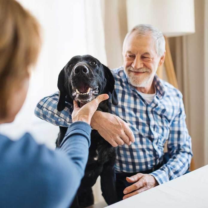 I migliori Cani per anziani come-scegliere-2