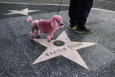 Steve McCurry. Animals. barboncino rosa