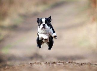 Come insegnare al tuo cane a non correre fuori dalla porta