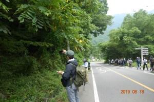 富士山周辺道路におけるロードキル調査