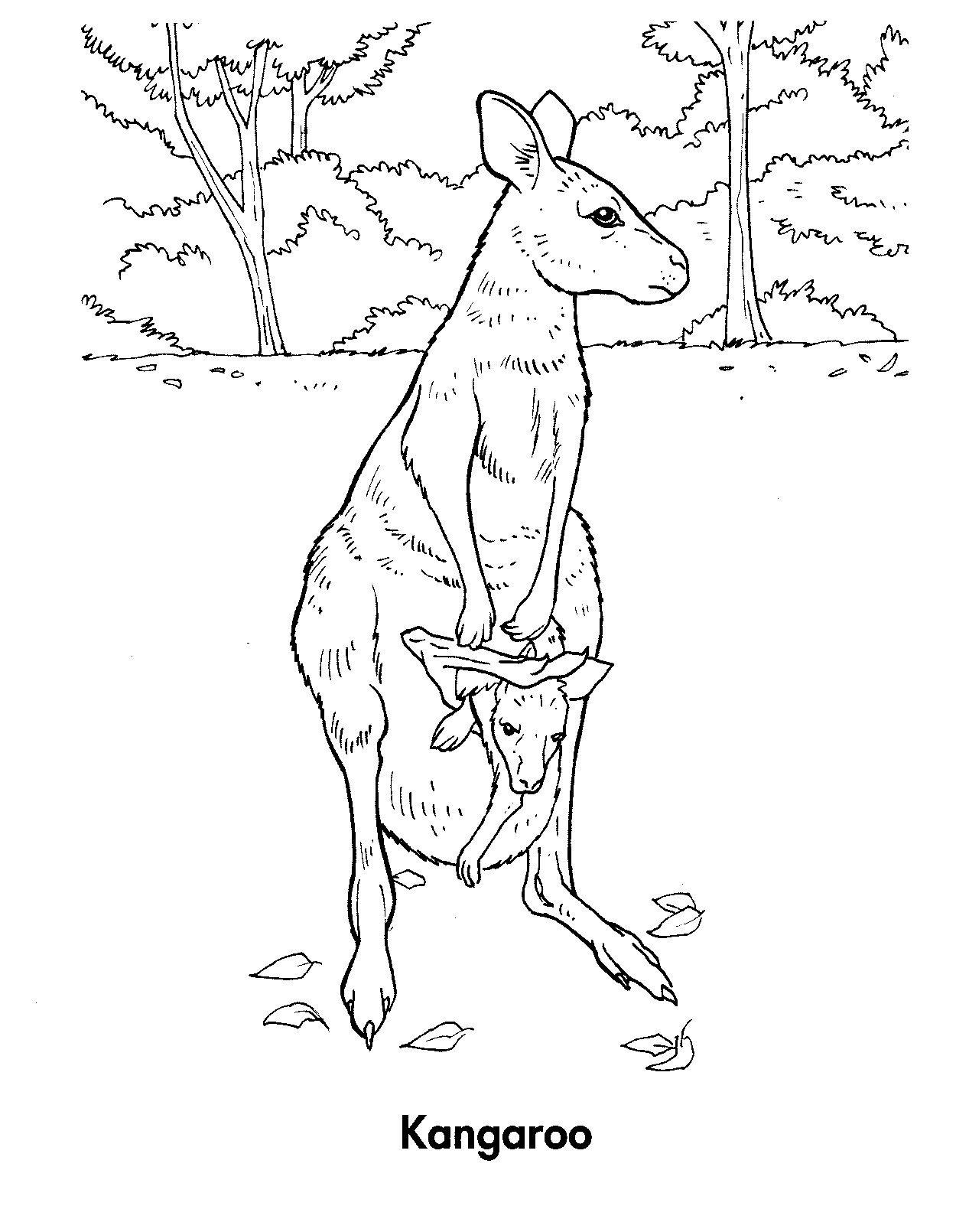 Free Printable Kangaroo Coloring Pages For Kids