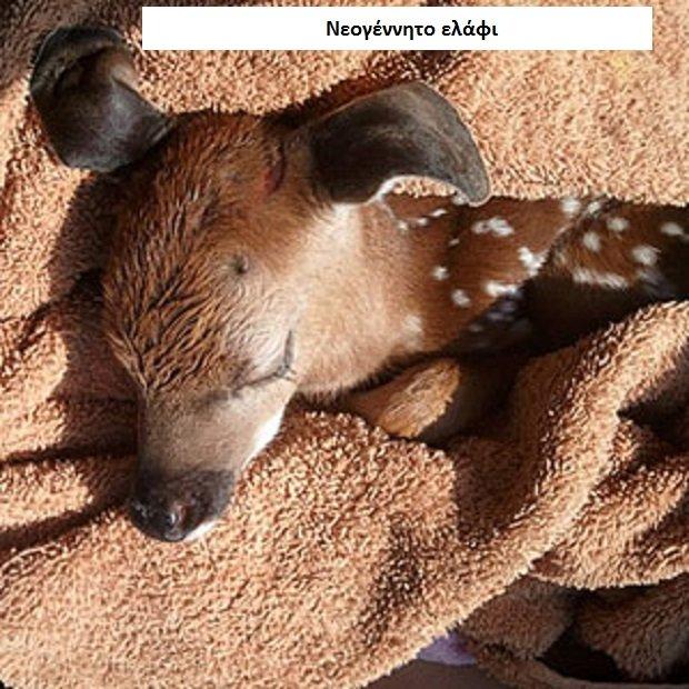νεογέννητα ζωϊκό βασίλειο