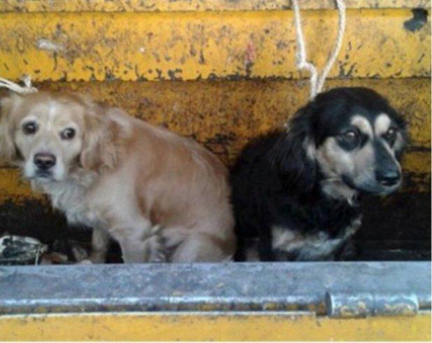 σκυλιά σκουπιδιάρικο