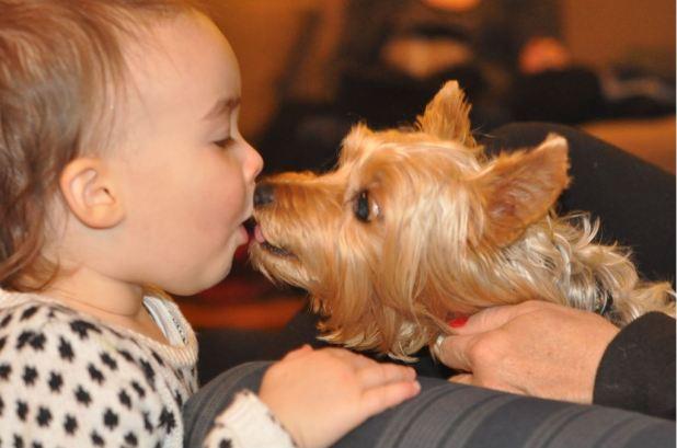 σκυλιά γλύψιμο