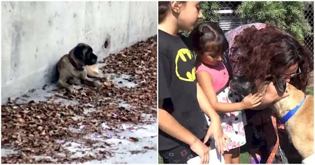 σκύλος είχε χαθεί Ο σκύλος τους είχε χαθεί και περιπλανιόταν μόνος για μέρες. Δείτε τη συγκινητική στιγμή της επανασύνδεσης με την οικογένειά του! επανασύνδεση με την οικογένεια