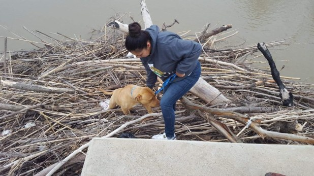 Χαμένο σκυλί είχε κολλήσει για μέρες σε μια στοίβα από κλαδιά στη μέση ενός ποταμού χαμένο σκυλί