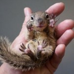 animal removal in charlottesville - squirrels