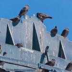 bird control charlottesville va