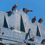bird removal charlottesville va