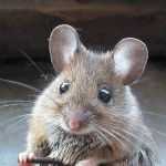 mouse removal charlottesville va