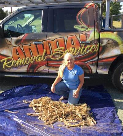 Animal Removal Services of Virginia safely and humanely remove snakes in the Chesterfield, Richmond, Midlothian, Henrico, Glen Allen, Charlottesville, Powhatan, Amelia, and other areas throughout Virginia.